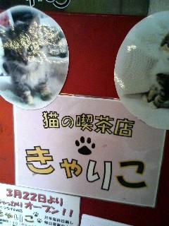 猫の喫茶店にて(=^・^=)
